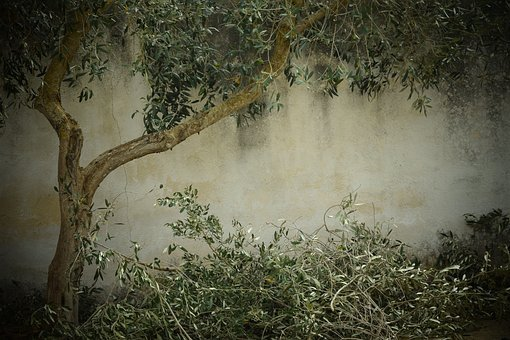 olive-tree-nostalgia-background