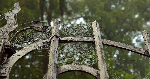 Metal, Metal Gate, Spider Webs, Old