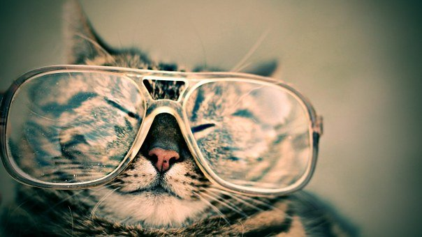 Cat, Glasses, Eyewear, Pet, Furry