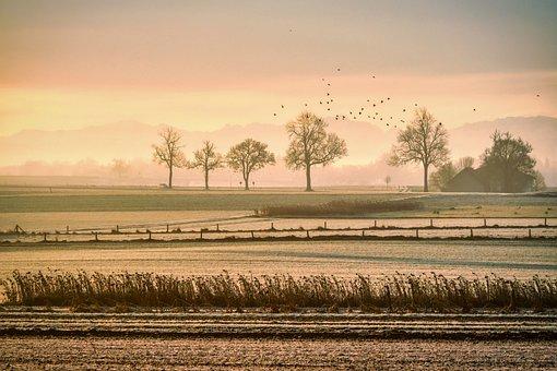 Pasture, Fog, Birds, Grass, Field